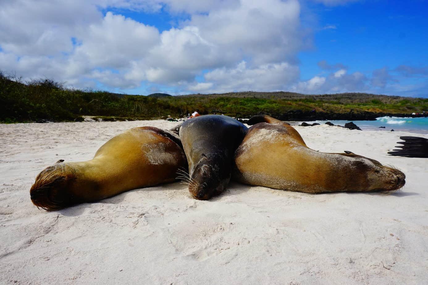 Den Strand teilen sich Seehunde mit Menschen. Wer hier ins Wasser geht, der schwimmt mit den flinken Tieren.